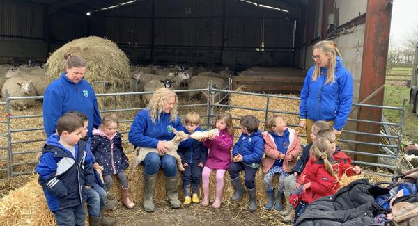 bottle feeding lamb