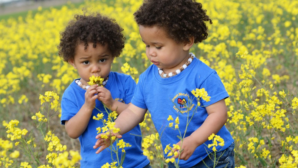 toddlers exploring oilseed rape field