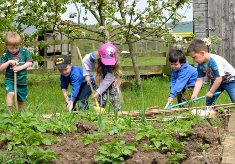 pre-school children working in vegetable patch