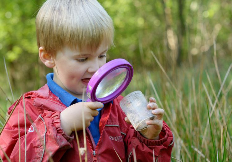 pre-school child minibeast hunting on forest school
