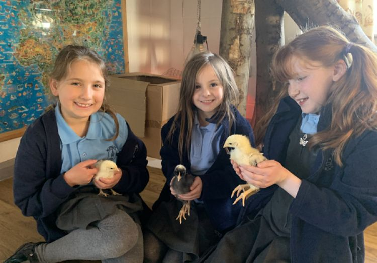 out of school club holding chick